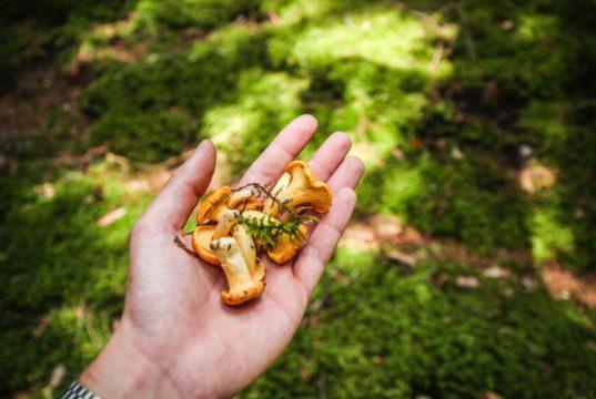 Grzyby w diecie dziecka. Foto unsplash.com