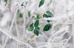 Foto unspash.com